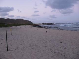 kaiwi beach 1